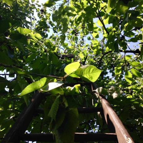 [frauenbaustelle] Baum